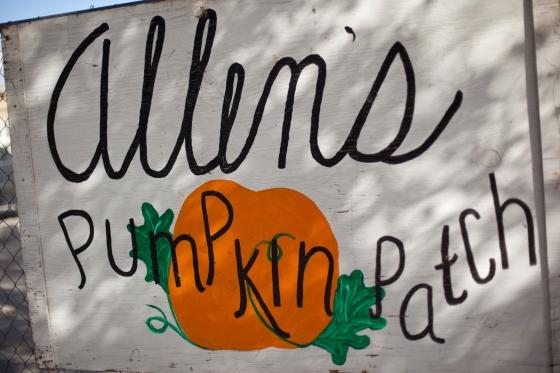 Allen's Pumpkin Patch flagstaff, az