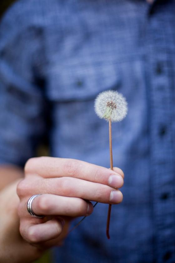 dandelion in flagstaff, az