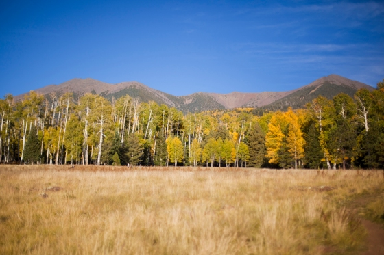 Lockett Meadow flagstaff arizona