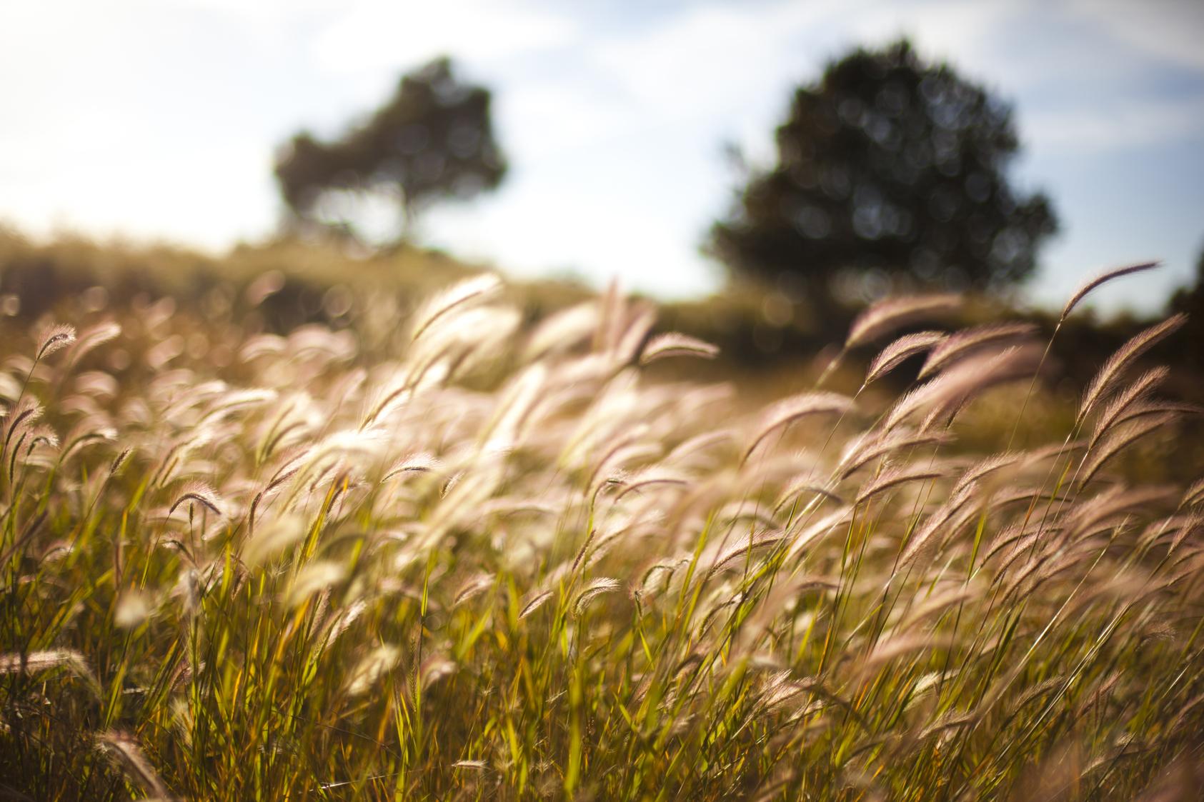 Locket Meadow Flagstaff Arizona